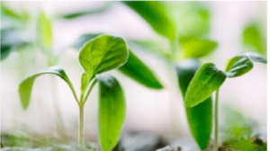 crop of indoor farming at scale